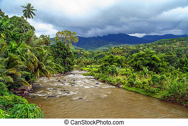 Jungle river in Indonesia - River flowing through dense...