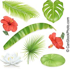 Jungle. Set of leaves and flowers. Tropical plants. 3d vector icons