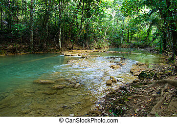 jungle - Stream in the tropical jungle