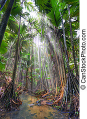 Jungle - Valee-de-Mai rain forest park on Praslin island,...