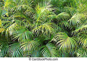 Jungle - Dense undergrowth