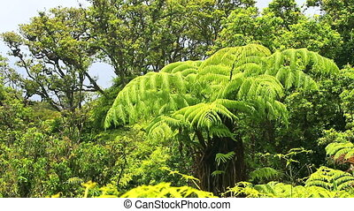 jungle - lush plants in jungle