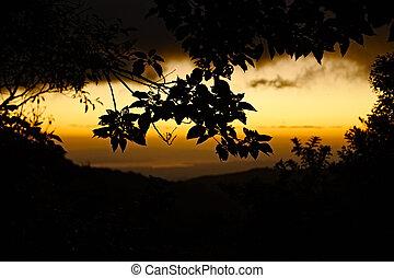 Jungle sunset in Childrens Eternal Rain Forest, Monteverde Area, Costa Rica.