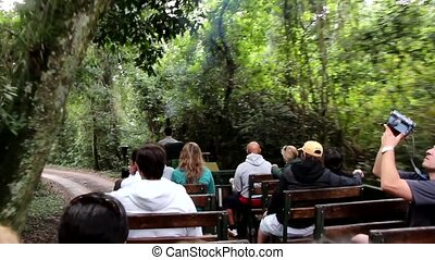 Tour in the jungle, in an animal reserve in Misiones, Argentina