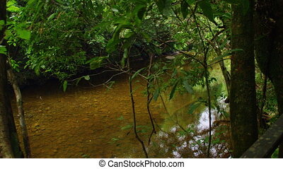 A wide shot of the river. Panning right shot. Wide shot of a jungle.