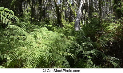 Jungle Trees - Thick lush green jungle trees, ferns and...