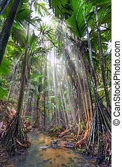 Jungle - Valee-de-Mai rain forest park on Praslin island,...