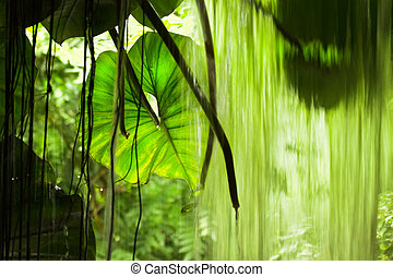 Jungle view, big leaves and falling water - Jungle view with...