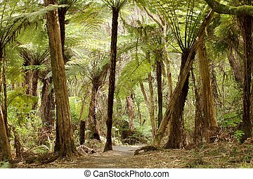 Jungle with giant ferns in New Zealand