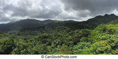 Jungles in El Yunque National  Forest