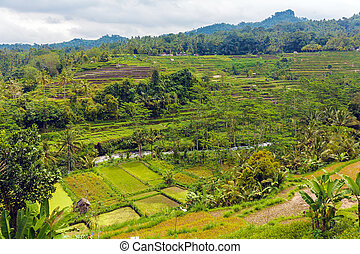 Jungles with River an Rice Field, Bali