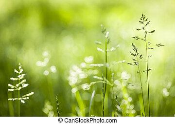 junho, florescendo, capim, verde