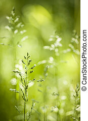 juni, blühen, gras, grün
