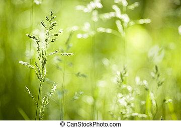 junio, hierba verde, florecimiento