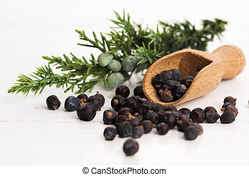 Juniper plant with berries