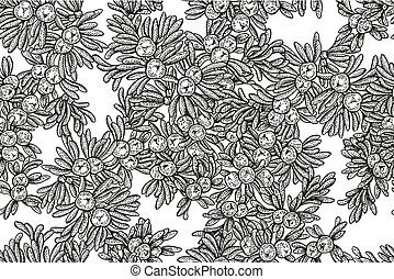 Juniper tree vector seamless pattern. Hand drawn illustration branch with berries on white background.