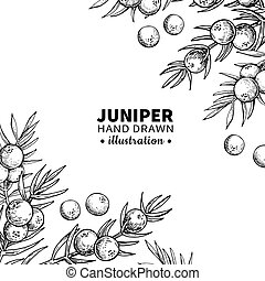 Juniper Illustrations And Stock Art 620 Juniper