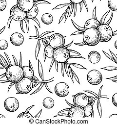 Juniper vector seamless pattern drawing. Isolated vintage background with berry on, branch.
