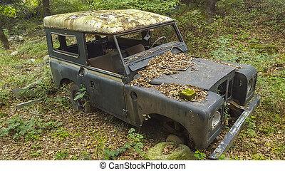 Junk car in woods