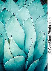 junto., bunched, folhas, pointed, agave, afiado, planta