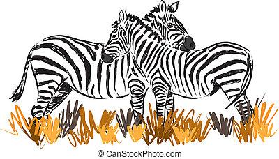 junto, dois, ilustração, zebras