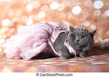 jurkje, kat, dancing