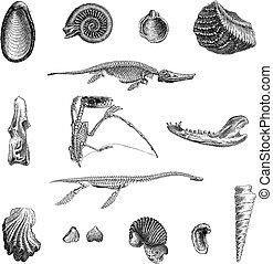jurrasic, 動物群, 型, 彫版