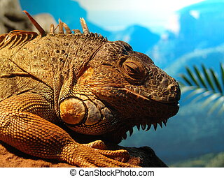just bored - ancient looking reptile with atitude