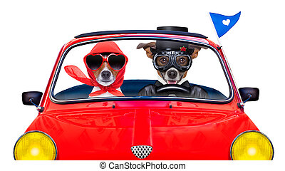 just married dogs - couple of just married jack russell dogs...