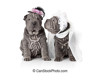 Just married - Two sharpei puppy dog dressed in wedding...