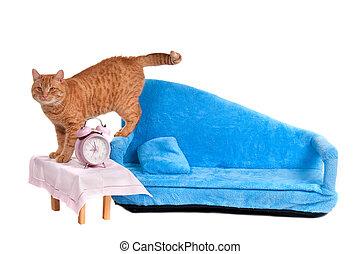 juste, a, haut, woke, chat