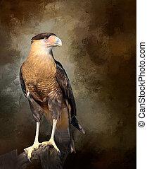 Juvenile Crested Caracara Bird Caracara cheriway Predator - ...