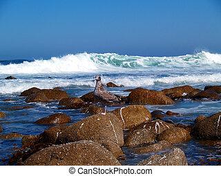 Juvenile Seagull Enjoying the Waves