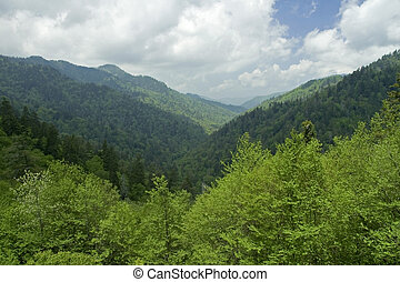 JW 034 102 05 - Spring Image, Great Smoky Mtns Nat. Park