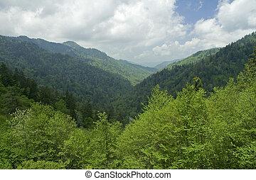 JW_034_102_05 - Spring Image, Great Smoky Mtns Nat. Park