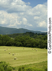 JW_038_015_05 - Early Summer Landscape, East Tennessee