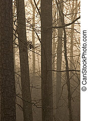 JWC_006_044_05 - Bare Trees in Fog