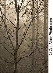JWC_006_054_05 - Bare Trees in Fog