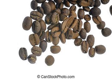 kávécserje fej, esés