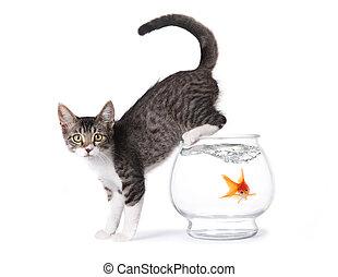 kã¤tzchen, auf, a, fishbowl