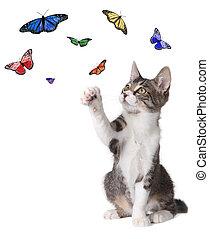 kã¤tzchen, schlagen, an, vlinders