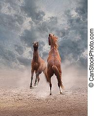 kämpfen, pferden
