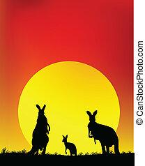 känguru, familj, silhuett