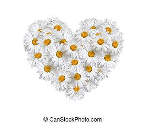 kärlek, tusenskönor, hjärta