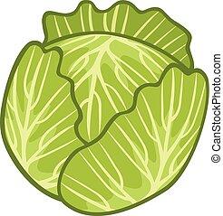 kål, grön, illustration