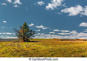 kék ég, magasvasút, ősz, fa, mari, mező, egyedül, oroszország