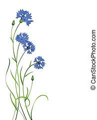 kék, búzavirág, csokor, motívum, elszigetelt