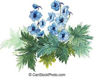 kék, bokor, anemones.