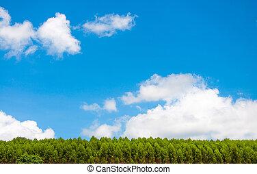 kék, elhomályosul, ég, bitófák, zöld, sóvárog