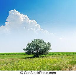 kék, elhomályosul, fa, ég, zöld, alatt, egyedül, fehér, táj